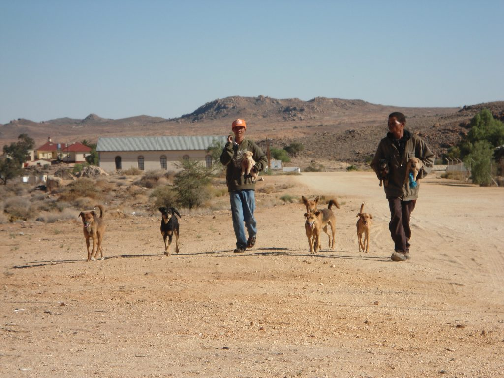 two man walking with their 5 dogs and 3 puppies in aus
