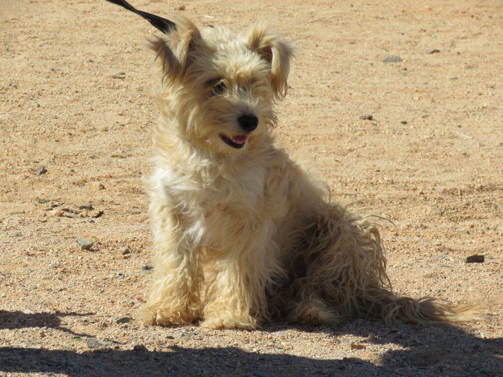 fluffy dog in aus