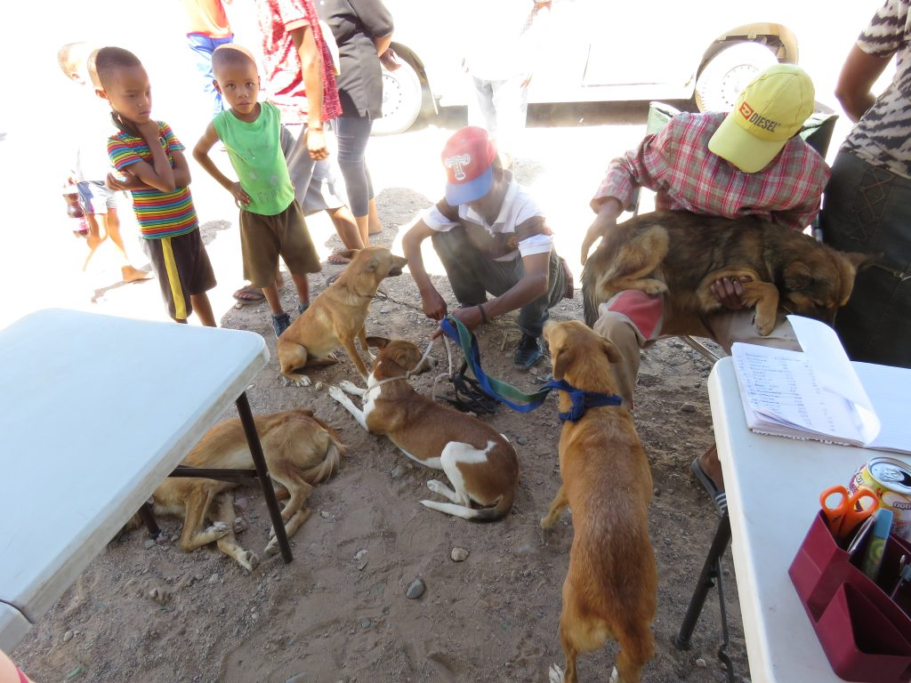 dogs and owners waiting next to the mobile clinic