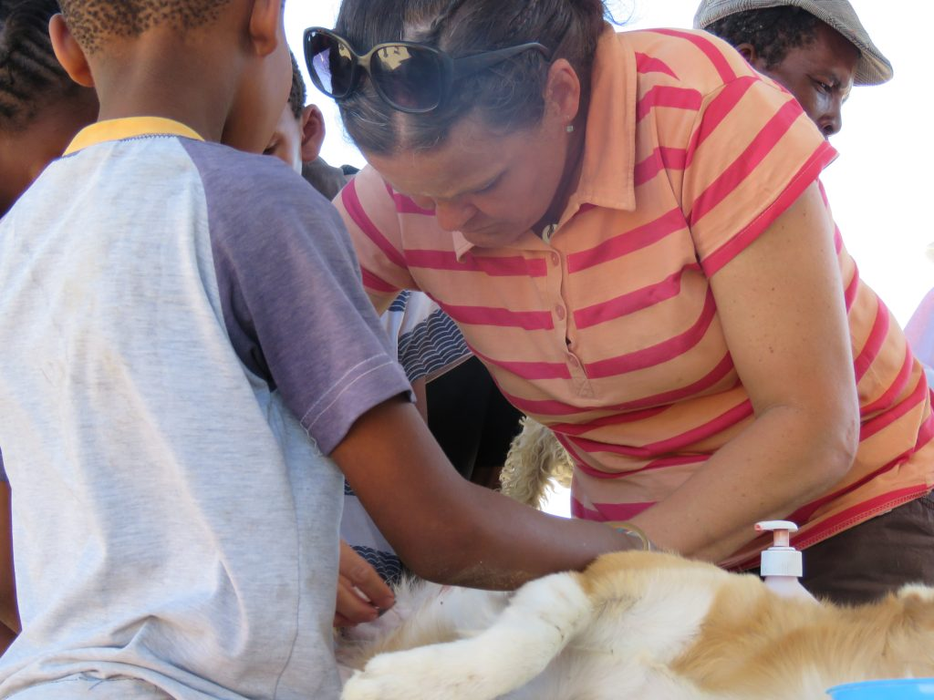 vet nurse is preparing a dog for the operation with the help of young owner